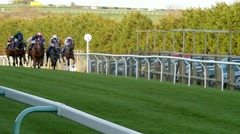 A group of horses in a racetrack Stock Footage