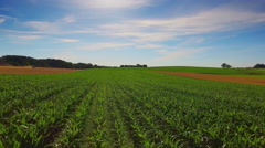 Cornfield drone countryside corn field farming rural scenery blue sky sunny day Stock Footage