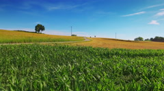 Countryside rural scenery cornfield agriculture field drone blue sky sunny day Stock Footage