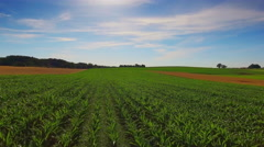Aerial shot cornfield countryside corn field drone forward motion blue sky sunny Stock Footage