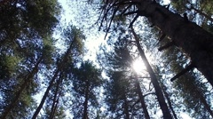 Morning in the forest. the sun's rays pass through trees Stock Footage