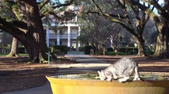 A cat drinks from a fountain in front of a beautiful gracious Southern mansion Stock Footage
