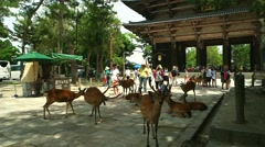 Nara - Sika deers and tourists in front of Todai-ji Temple entrance gate. Stock Footage