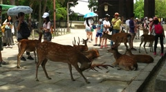 Nara - Close up of Sika deers and tourists in front of Todai-ji Temple gate. 4K Stock Footage