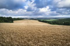 Beautiful landscape image of huge field of barley on Summer day in countrysid Stock Photos