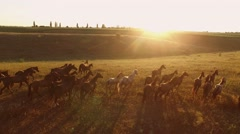 Horses are running. Stock Footage