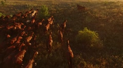 Aerial view of running horses. Stock Footage