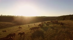 Aerial view of walking horses. Stock Footage