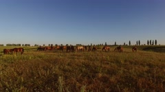 Horse herd on the meadow. Stock Footage
