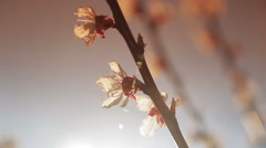 Flowering tree in the sun Stock Footage
