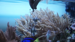 Feed for fish in the aquarium Stock Footage
