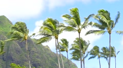 Palm trees blowing in the wind Hawaii Stock Footage