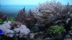 The marine fauna in the aquarium Stock Footage