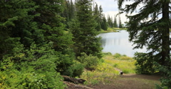 Dog walking trail mountain lake and forest DCI 4K Stock Footage