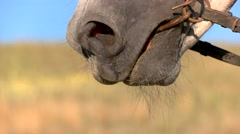 Snaffle bit on horse. Stock Footage