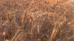 Field under sunlight. Stock Footage