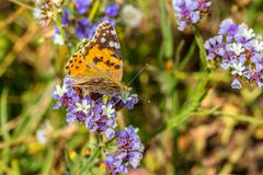 Insect butterfly sits on a flower Kuvituskuvat