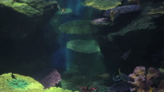 Aquarium with tropical fishes Stock Footage