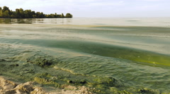 Algal bloom polluted water green color in lake Stock Footage