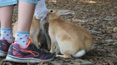 Okunoshima, JAPAN: Rabbits on Okunoshima island (a.k.a. Bunny island) in Hiroshi Stock Footage