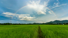 Time lapse - rainbow over rice field   Stock Footage