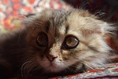 Nice fluffy kitten Stock Photos
