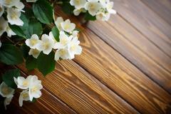 White flowers of jasmine Stock Photos