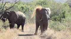 Elephant dust bath. Stock Footage