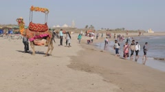 Tourists and camel on beach,Veraval,Somnath,India Stock Footage
