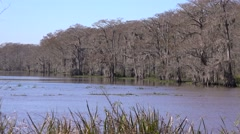 Establishing shot of a thick mangrove swamp in Louisiana. Stock Footage