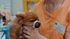 Cute puppy on operating table in veterinarian's clinic Stock Footage
