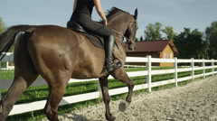 CLOSE UP: Young female training with big muscular dark brown stallion horse Stock Footage