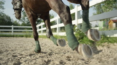 CLOSE UP: Strong muscular dark brown stallion galloping in sandy riding arena Stock Footage