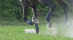 SLOW MOTION: Strong muscular brown horse cantering and rising dust and sand Stock Footage