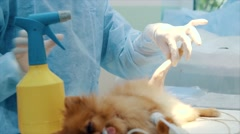 Veterinarian makes surgery the dog with fracture back paws Stock Footage
