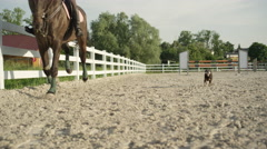 SLOW MOTION: Small dog running fast along the woman horseback riding a horse Stock Footage