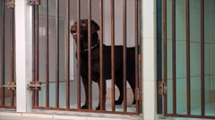 Veterinary Nurse Checking On Dog In Cage Stock Footage