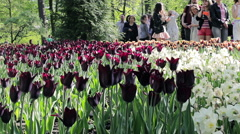 Pedestrians Looking with Admiration on Field of Exotic Tulips Stock Footage
