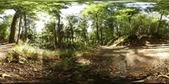 360 VR Beautiful Harz mountain range summer forest windy sunny day Stock Footage