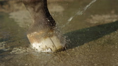 CLOSE UP: Cleaning horse hoof with jet of water and keeping them clean Stock Footage