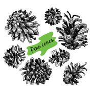 Collection of drawn pine cones Stock Illustration