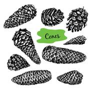 Collection of drawn fir cones Stock Illustration