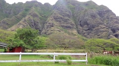 Horse Ranch 2 Hawaii Oahu Island Stock Footage