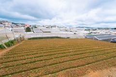 Farming plots of land in mountain Vietnam Stock Photos