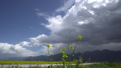 Cars driving through rape flower field, Qinghai,China Stock Footage