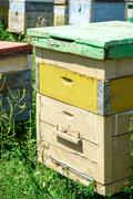 Wooden beehives and painted vibrant colours used by bees as a home colony for Stock Photos