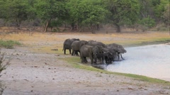 Herd of African elephants drinking from lagoon waterhole Stock Footage