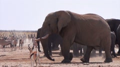Overcrowded waterhole with Elephants, zebras, springbok and orix Stock Footage