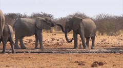 African elephants at a muddy waterhole Stock Footage