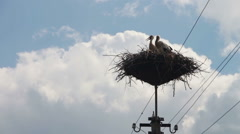 Storks are Sitting in a Nest on a Pillar Stock Footage